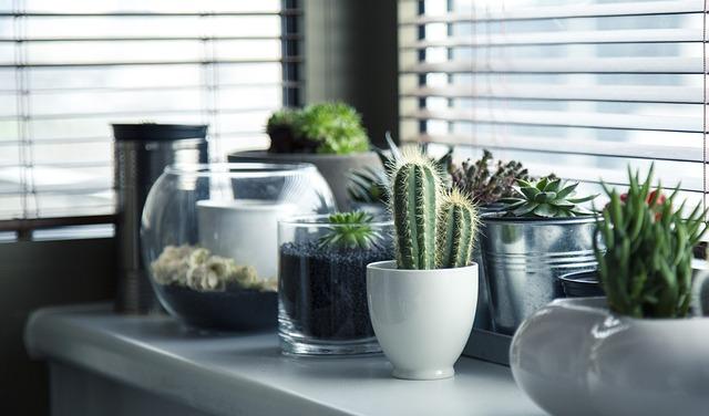 parapet na kaktusy